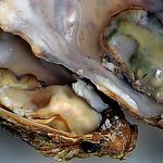 Ivan Tnay - Oysters