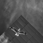 Tim Keane - Launch