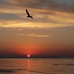Jan Knight - Bayside Sunset