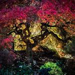 Marlene Chaitra - Autumn Glory