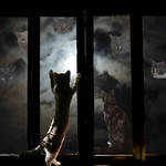 Lisa Li - A Moon Night