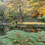 Vira Vujovich - Nicholas Gardens in Winter