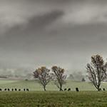 Vicki Moritz - Rainy day Taggerty