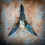 Vicki Moritz - Dead Swallow