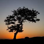 Stephen Edmonds - Against the sunset