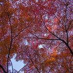 Russell Lucas - Tokyo Edo Red