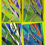 Tim Keane - Colour & Form