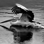 Ivan Tnay - Water landing
