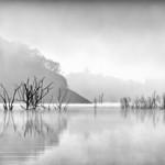 Vicki Moritz - Devils river fog