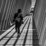 Phillip Harris - Seaguls and Skateboards