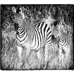 Ray Stabey - Botswana Zebras