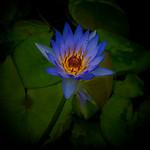 Alan Bennett - Flower Powered