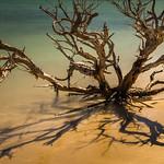 Anne Ramus - Ningaloo Driftwood