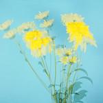Jill Anderson - Summer Flowers.jpg
