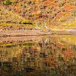 Ron Weatherhead - Lake Argyle Reflection