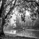 Julie Madders - MURRAY RIVER
