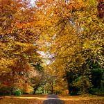 Peter Bond - Autumn Streetscape