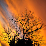 Ross Eddington - Fire by Night