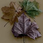 Alan Bennett - Autumns fallen