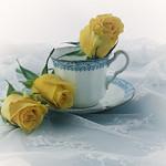 Jill Anderson - Granny's cup