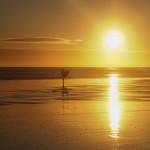 Ross Major - Surfing Nirvana