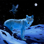 Colin Killick - Blue Wolf