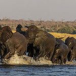 Richard Pilcher - Chobe River Crossing