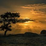 Hai Thi Nguyen - DogRocks 's Sunset