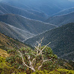 Rosie Hughes - VIEW FROM MT HOTHAM