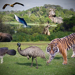 Ron Weatherhead - Free Range Zoo