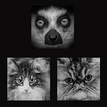 Marlene Chaitra - Cat Faces