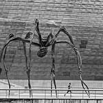 Geoff Shaw - The Spider