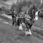 Bob Thomas - Workhorse
