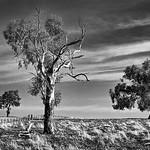Alan Scott - Highcountry Paddock