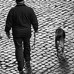 Jill Shaw - Walking the dog