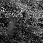 George Skarbek - Abandoned tractor