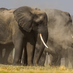 Richard Pilcher - Chobe elephants