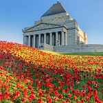 Michelle Golden - Shrine of Remembrance