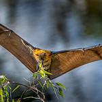 Felix Shparberg - Impressive wingspan