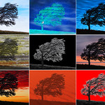 Tim Keane - Ushuaia Tree