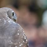Ross Eddington - Birds Eye View