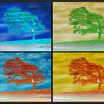 Tim Keane - Tree Seasons