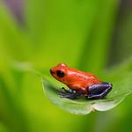 Jill Shaw - Blue jeans frog