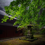 Colin Killick - Japanese Shrine