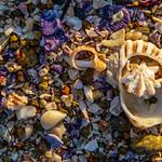 Geoff Shaw - Dawn on the beach