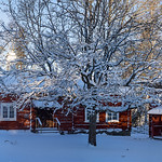Jill Shaw - Traditional Swedish farm in snow