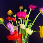 Jill Anderson - Flowers