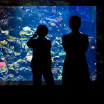 Trace O'Rourke - Aquarium Silhouette