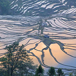 Helen Warnod - Yuanyang rice terraces