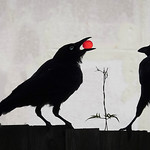 George Skarbek - Crow with a cherry tomato